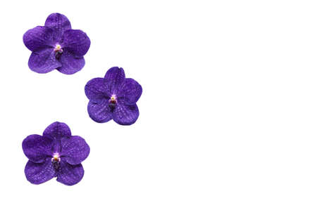 Flower wallpaper from purple color orchid isolated on white flower wallpaper from purple color orchid isolated on white background and space for text stock mightylinksfo
