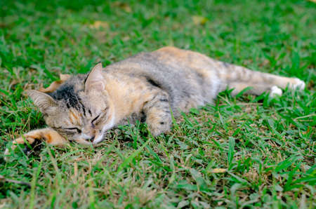 Beautiful adorable sleepyhead leopard color cat relaxing on the grass with cute action.