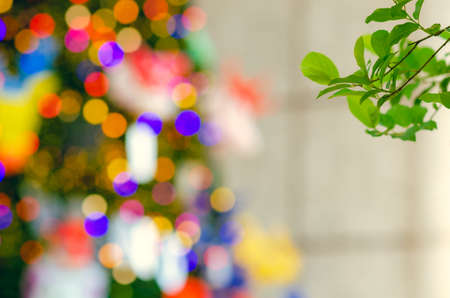 Green leaves tree with blurred focus of colorful Christmas tree for Holiday decoration background.