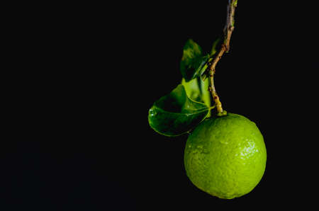 Green lime with leaves on dark background.