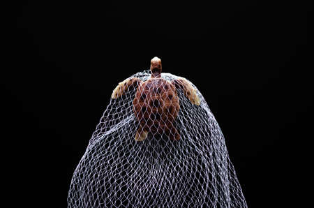 A turtle toy model trapped in white net on black background. Minimal world ocean day concept. Reklamní fotografie