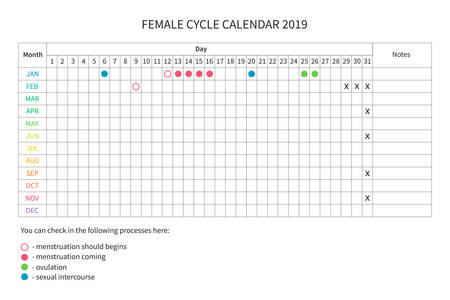 Vector calendar of the females cycle. Monthly menstrual cycle. Women health and physiology. Vector women calendar template 2019