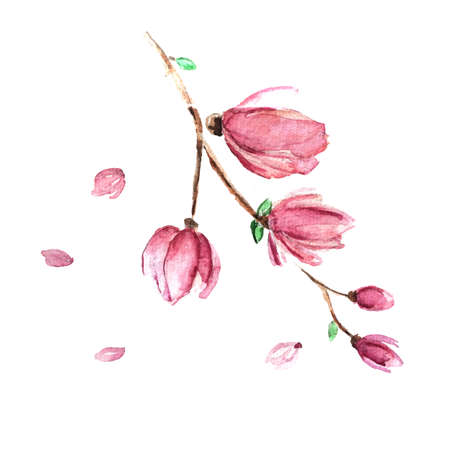 Beautiful floral and leaves pattern. Design for invitation, wedding or greeting cards. Pink watercolor flowers. Branch with pink flowers. Vector pink magnolia. Holiday card with flower design. Ilustração