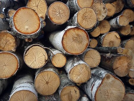 poaching: The birch trees, ready for using. With age rings.