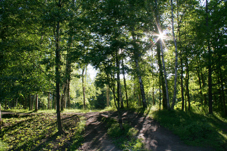 scamper: Sun light shine through trees in dark forest. Light rays among leaves of trees. Beautiful wood for walking. Park in morning best for run or scamper