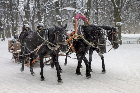 Horses pull sleigh with passangers in cold winter weather. Black troika - traditional russian horse triple. 스톡 콘텐츠