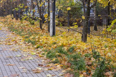 Autumn leaves background. Yellow maple leaf on the ground. 스톡 콘텐츠
