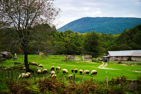 A herd of sheep graze in alpine meadows