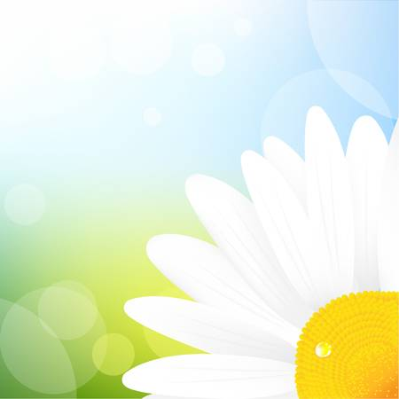 ox eye daisy: Camomile And Blue Sky, Vector Illustration