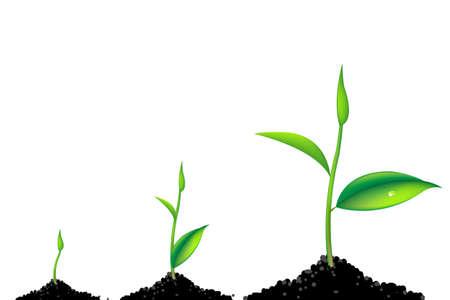 3 Spruiten, groene jonge planten proces, geïsoleerd op witte achtergrond