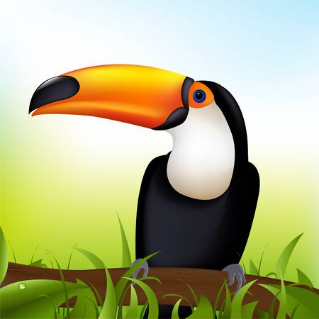 Toucan sitting on a branch under a blue sky  Vector