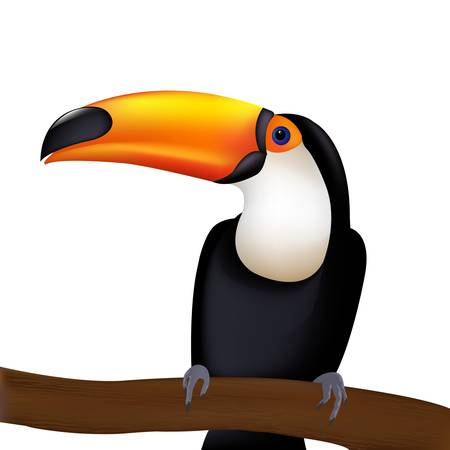 tucan: Toucan, Isolated On White Background, Vector Illustration