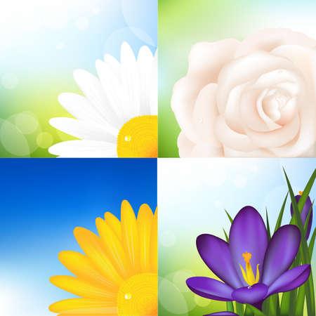 ox eye daisy: 4 Flowers, Rose, Crocus And Camomile , Vector Illustration