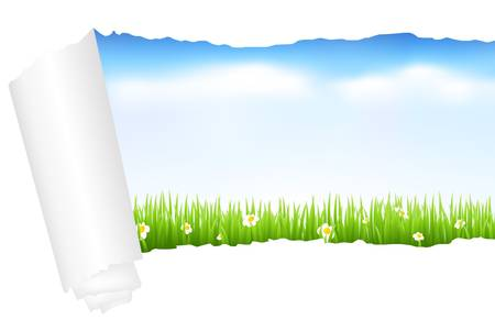 flower banner: Beautiful Green Landscape With Grass, Isolated On White Background, Vector Illustration