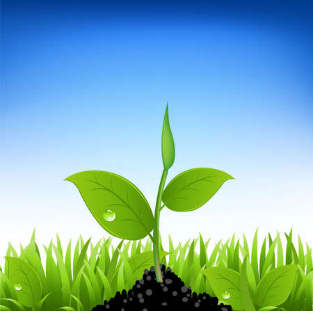 seedling growing: Green Grass And Young Plant, Vector Illustration Illustration