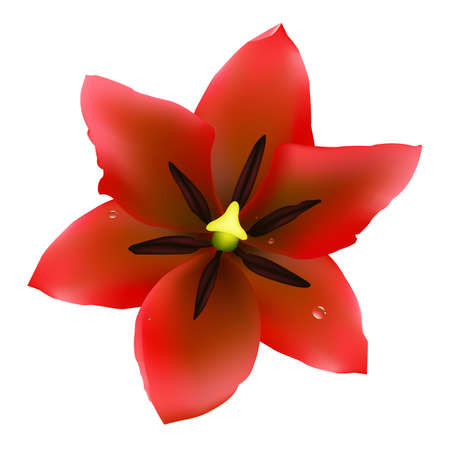 Red Tulip, Isolated On White Background Vector