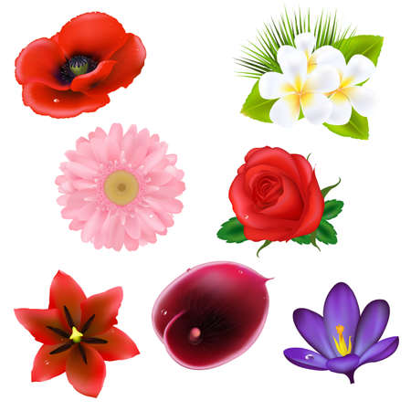 8 Flowers, Isolated On White Background Vector
