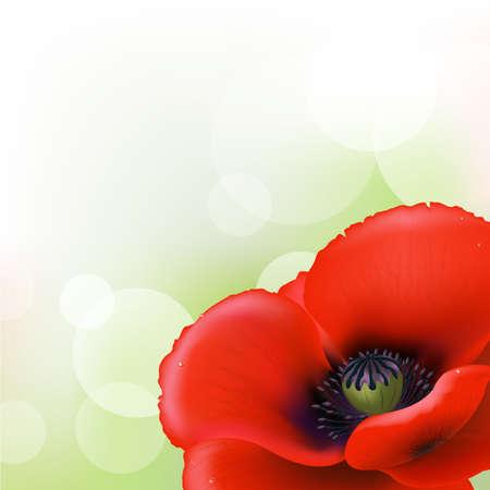 Red Poppy Stock Vector - 10394786