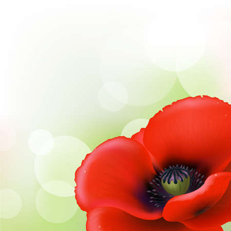 flowers close up: Red Poppy Illustration