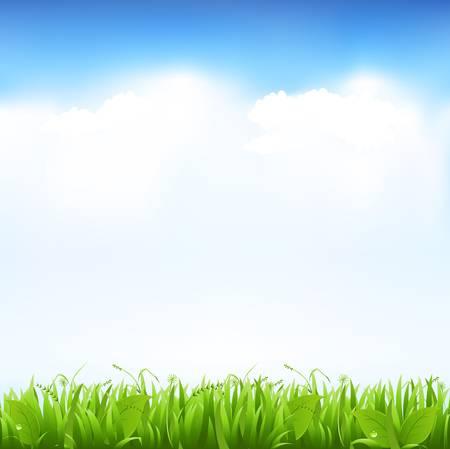 the sky clear: Hierba y cielo, ilustración vectorial