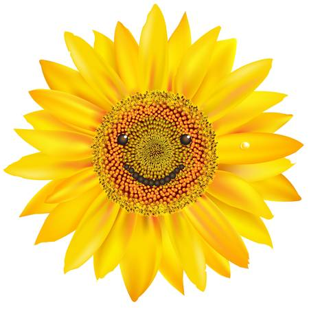 close up face: Smiling Sunflower, Isolated On White Background, Vector Illustration