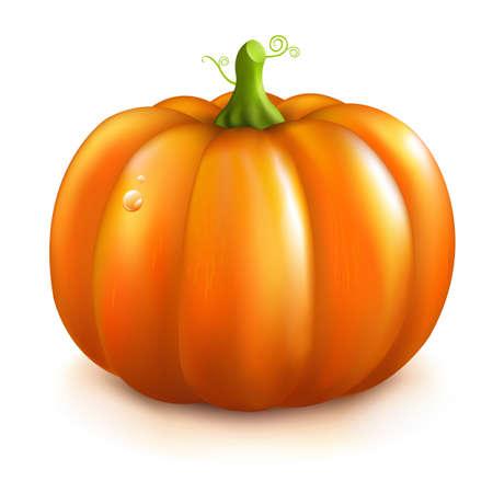 Orange Pumpkin, Isolated On White Background. Stock Vector - 11097650