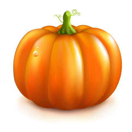 Orange Pumpkin, Isolated On White Background. Vector