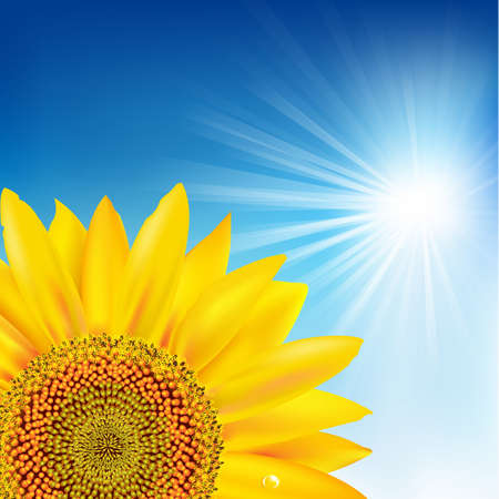 Blue Sky And Sunflower. Vector
