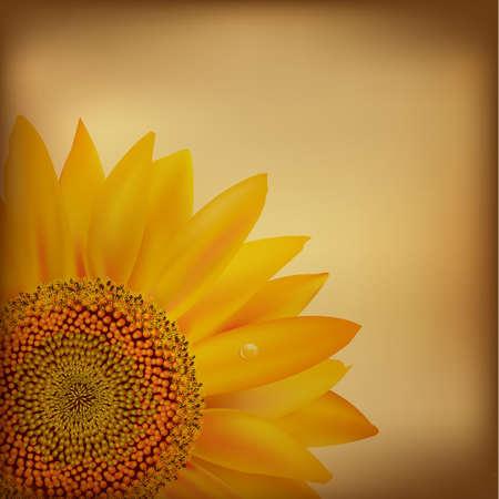 stamen wasp: Vintage Paper With Sunflower.