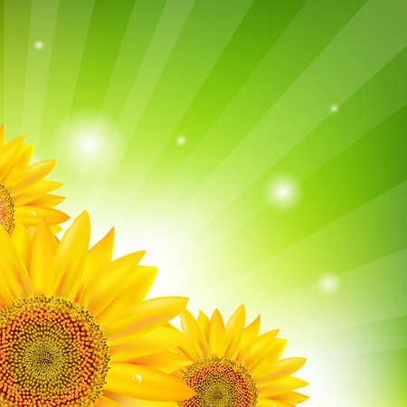 Sunflower And Sunburst, Vector Illustration Vector