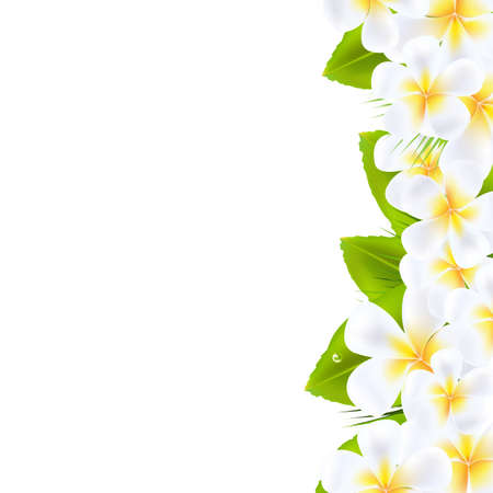 Frangipani Flowers Border, Vector Illustration  Vector
