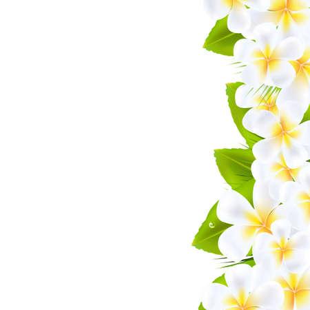 plumeria flower: Frangipani Flowers Border, Vector Illustration
