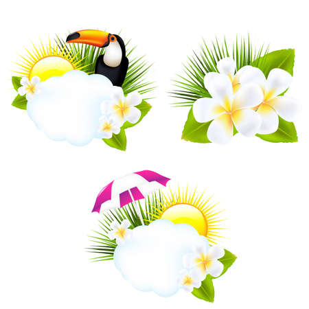 birds of paradise: Tropical Illustrations, Isolated On White Background, Vector Illustration Illustration