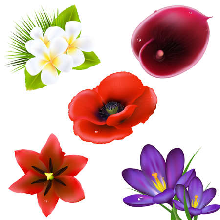 Set Of Realistic Flowers, Isolated On White Background, Vector Illustration  Vector