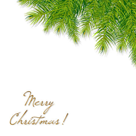 spruce: Rama del �rbol de navidad, ilustraci�n vectorial