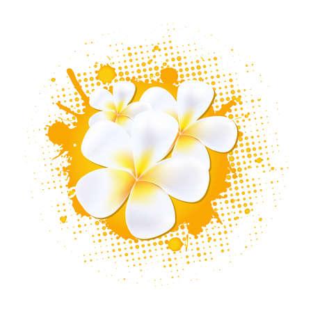 plumeria on a white background: Flower Background With Frangipani, Vector Illustration Illustration