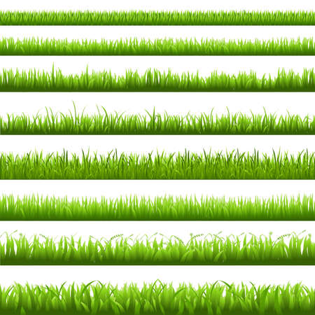 grass blades: Green Grass Borderi, Vector Illustration