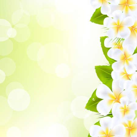 폴리네시아: 잎과 프랜지 패니 꽃