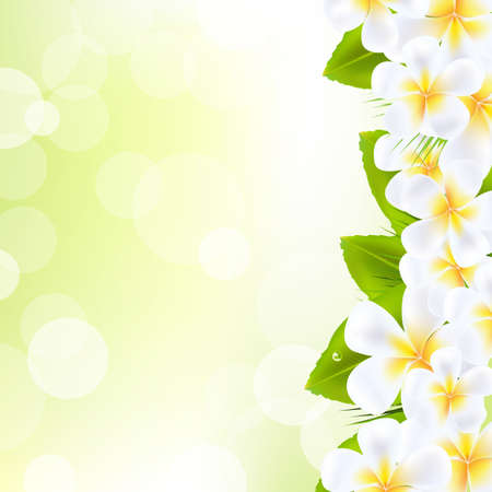 Frangipani Flowers With Leaf   Vector