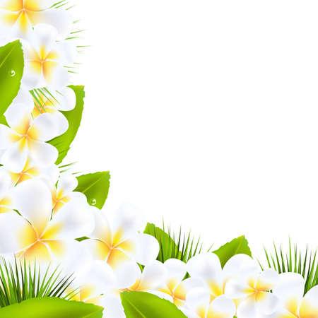 폴리네시아: 프랜지 패니 꽃 테두리 잎, 벡터 일러스트 레이 션