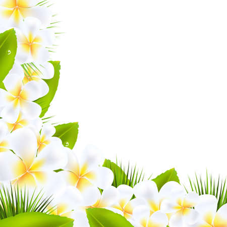 hawaiian culture: Frangipani Flowers Borders With Leaf, Vector Illustration