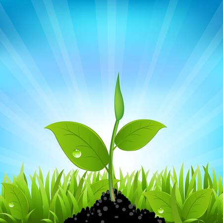 seedling growing: Beams And Grass, Vector Background