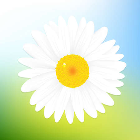 Beautiful Daisy Of Blue Sky Background,Illustration Stock Vector - 13543645