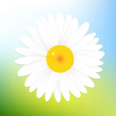 Beautiful Daisy Of Blue Sky Background,Illustration Stock Vector - 13543645