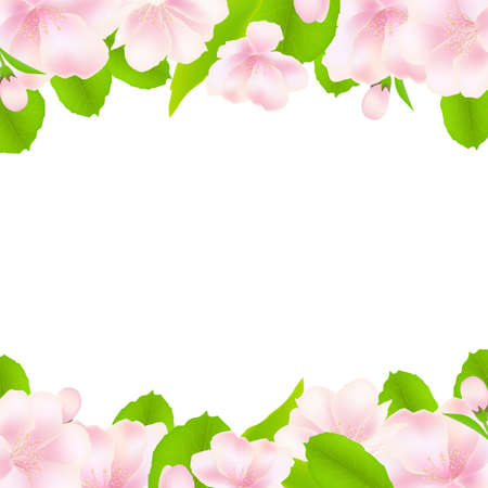 Apple Tree Flowers With Frame, Isolated On White Background, Illustration Vector