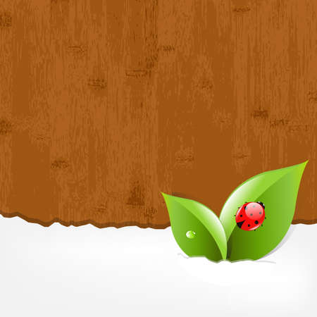 Wood Background With Red Ladybug Vector