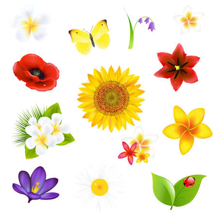 Big Flowers And Leaf Set Stock Vector - 14104668