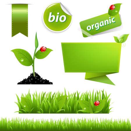 Green Eco conjunto con la hoja y la mariquita, aisladas sobre fondo blanco