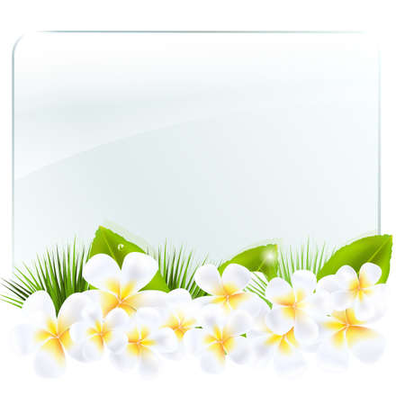 pink plumeria: Glass Frame With Frangipani, Isolated On White Background, Vector Illustration