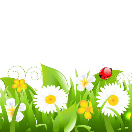 Flowers With Grass Leafs And Ladybug, Isolated On White Background,  Illustration Vector